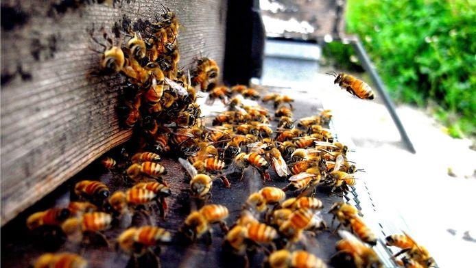 Honingbijen, hard aan het werk. Het water in de sloten rond de boomkwekerijen in Boskoop bevat nog steeds te veel van het insecticide imidacloprid. Dat blijkt uit onderzoek van de Universiteit Leiden. Het middel is neurotoxisch en wordt gezien als de veroorzaker van de massale bijensterfte.
