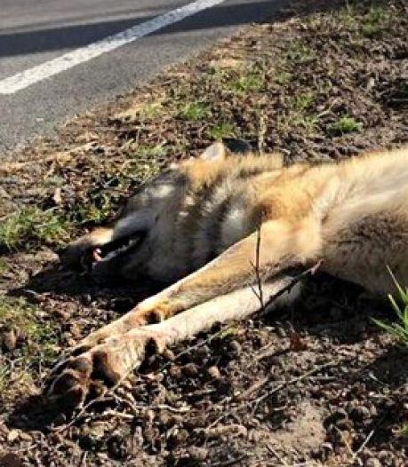 Spaar de ree en de wolf: rij rustiger in de natuur