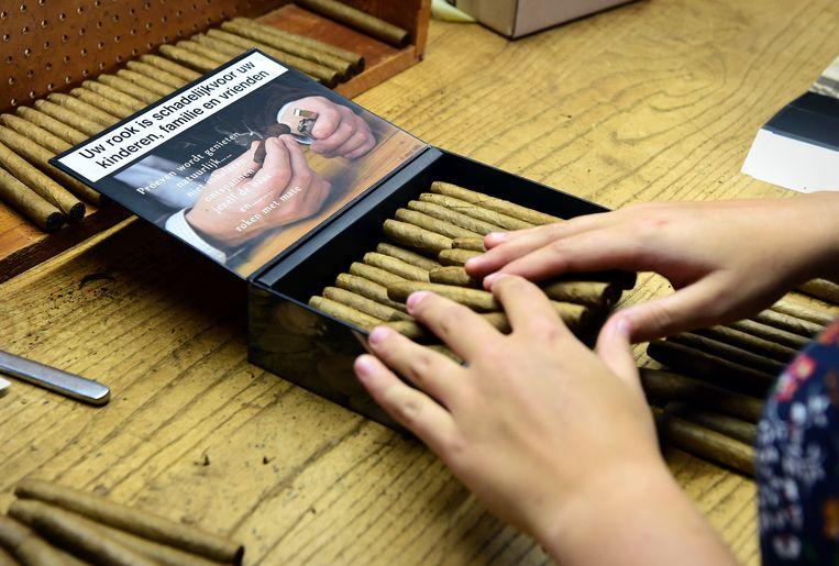 In sigarenfabriek De Olifant worden de sigaren in de nieuwe sigarendoosjes gedaan, 31 juli 2019. Beeld Marcel van den Bergh / de Volkskrant