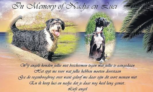 De honden Nadja en Luci werden uit Bulgarije en Griekenland gehaald voor een betere toekomst in Nederland, maar vonden de dood vanaf een hoge brug boven het Amsterdam-Rijnkanaal.
