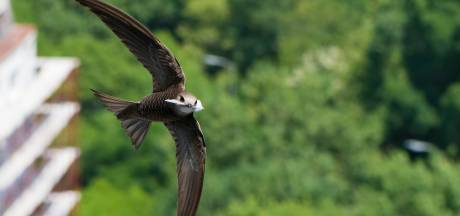 In Oisterwijk zijn ze tuk op de nestkastjes van Natuur in de Wijk