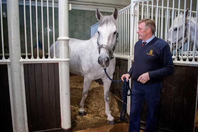 Voor de koninklijke koets worden 'Windsor Grey'-paarden gespannen.