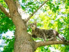 Dierenambulance liet kat inslapen en vond daarna de eigenaar: 'Laat alsjeblieft je dier chippen'