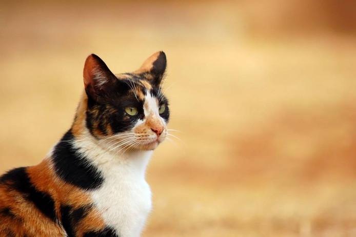 Stockfoto van een kat.