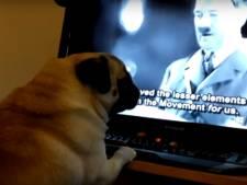 Man die mopshond de Hitlergroet leerde veroordeeld voor haatmisdrijf