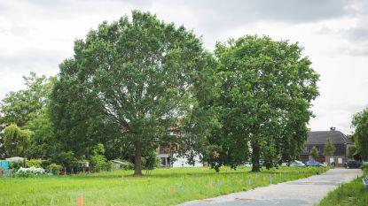 Al 1.600 handtekeningen om bomen in de Boomstraat te redden. Sociale huisvestingsmaatschappij wil ze kappen voor woningen