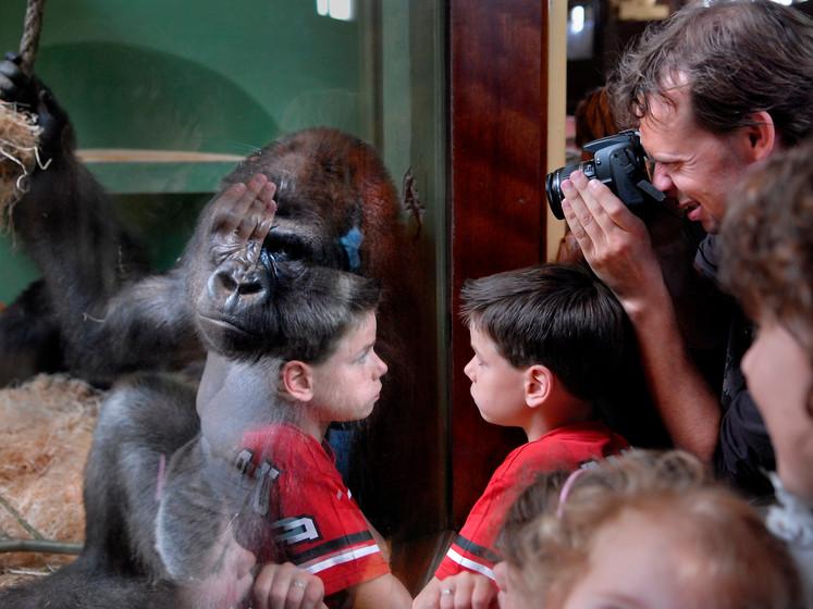 De aap is los! Na 10 jaar nog steeds achtervolgd door Bokito