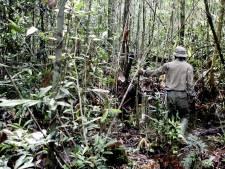 Ontbossing Braziliaanse regenwoud neemt sterk toe