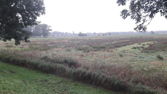 Het verontreinigde perceel aan de Winterdijk in Sprang-Capelle zoals het er vorige zomer uitzag.