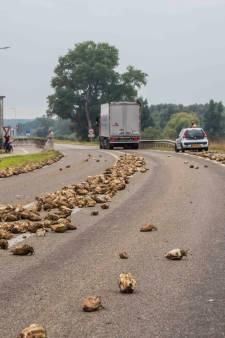 Vrachtwagendeur schiet open: bieten stuiteren over de weg bij Zutphen