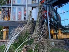 Tilburg gaat verrotte populieren bij Factorium omzagen na stormschade, ultieme poging tot behoud stammen