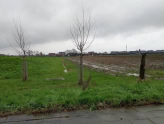 Oppositie blijft bezorgd over nieuwe verkaveling Plaatsmolenweg, gemeentebestuur verzekert dat waterbuffering ruim voldoende is
