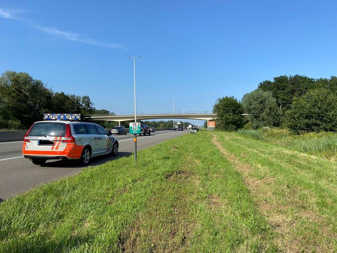 Langs de E34 niet ver van de afrit Oelegem haalde de lokale politie, lokale brandweer en Wegpolitie Antwerpen vrijdagnamiddag vier ontsnapte koeien uit de berm en gracht