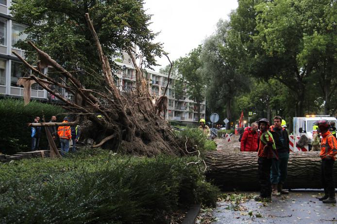 Een omvallende boom heeft de zwangere zussen op een haar na gemist in Schiedam. De boom knalde op de bumper van de auto.