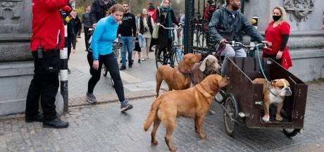Borden met waarschuwing voor hondengif jaagt baasjes stuipen op het lijf
