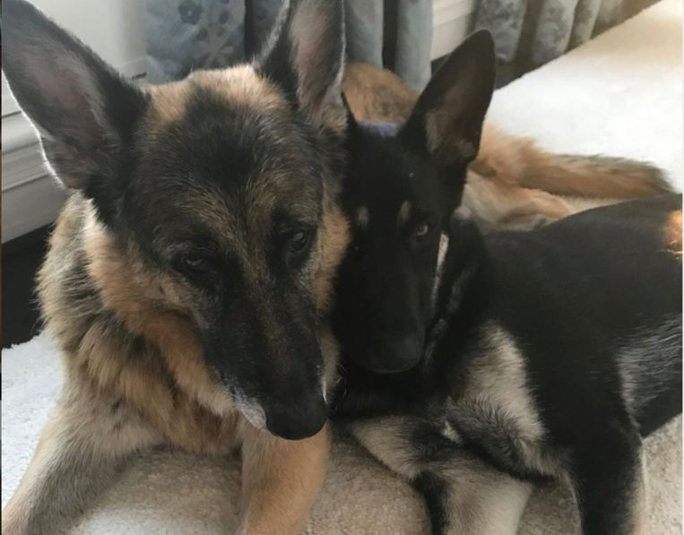 Links hond Champ, rechts Major Beeld Instagram Jill biden
