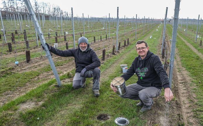 Op wijndomein Den Nachtegael zijn Dirk Syx en wijnbouwkundige Andraeï Homenko in de weer met vuurpotten die moeten vermijden dat de vorst druiven kapotmaakt.