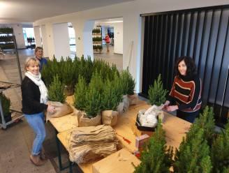 """Lionsclub Turnhout Hartevrouwe wil minstens 7.000 mini-kerstboompjes aan de man brengen: """"Opbrengst gaat integraal naar onze goede doelen"""""""