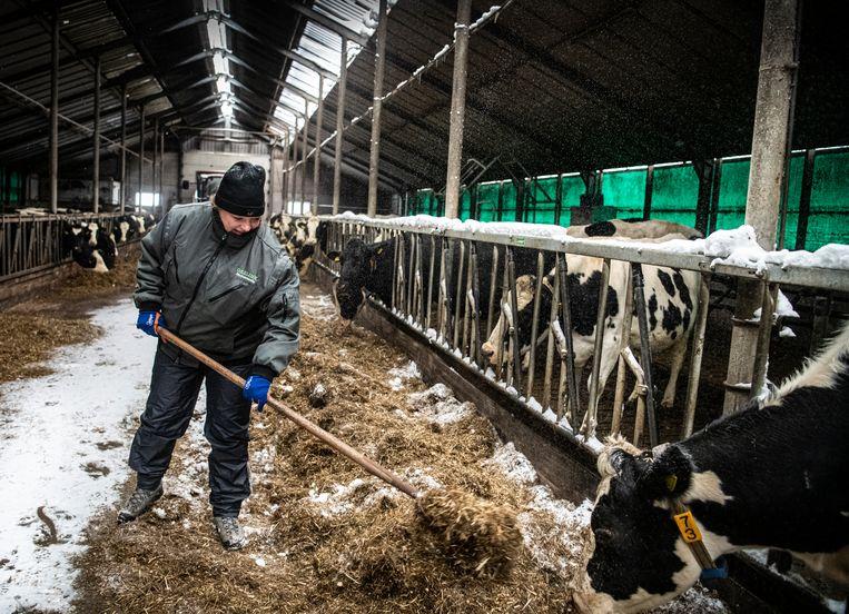 Heleen Lansink  houd het eten van de koeien schoon.   foto /  Koen Verheijden. Beeld Koen Verheijden