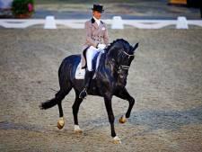 Paardensportwereld in rouw: wonderhengst Totilas (20) overleden