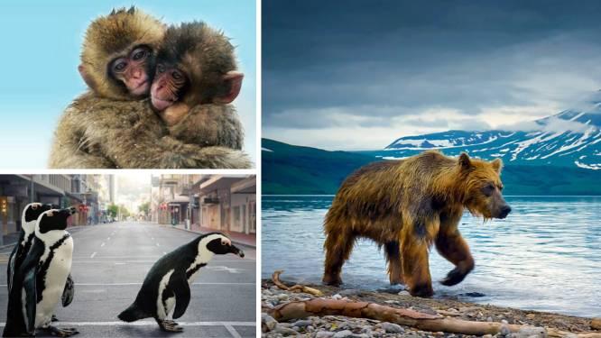 Op wereldreis vanuit je zetel: deze natuurdocumentaires moet je gezien hebben