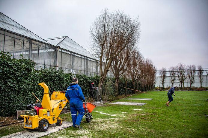 's-Gravenzander Ton van Dillen moet zijn bomen weghalen omdat ze op grond staan die bestemd is voor glastuinbouw.