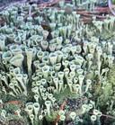 """Groenbekerkorstmos op de Groote Heide, één van de favoriete foto's van Lianne Stevens. ,,Bij het uitvergroten zag ik pas echt goed hoe mooi het was: op mijn foto zie je de ijskristallen er nog op zitten."""""""