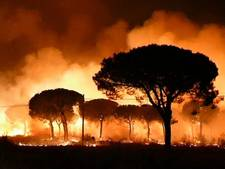 Toeristen geëvacueerd vanwege bosbrand Spanje