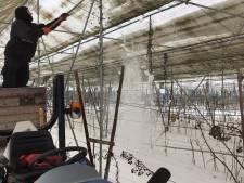 Sneeuw zorgt voor grote schade aan zelfpluktuin van Barton Arnts in Ooij