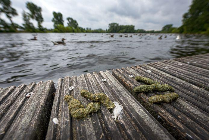 De overlast van ganzen was afgelopen zomer groot in Zutphen. Zo ook bij de vijver bij sportcomplex Zuidveen. En dat al voor het derde jaar op rij.