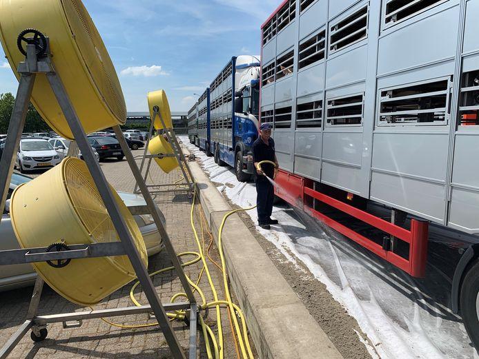 De situatie op hete dagen bij slachterij VION in Boxtel; vrachtwagens met varkens worden koel gehouden met grote ventilatoren. Zeil op het asfalt wordt nat gehouden.