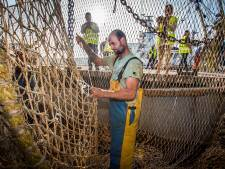 Europees pulsverbod noopt vissers garnalen te gaan vangen