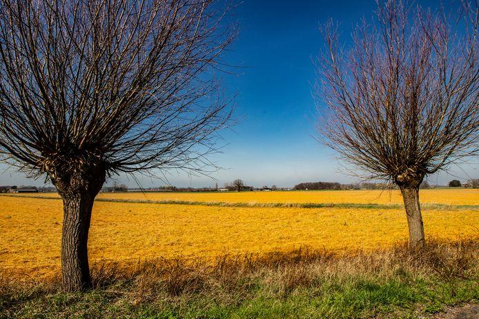 Percelen bewerkt met pesticiden met glyfosaat, nabij Deventer.