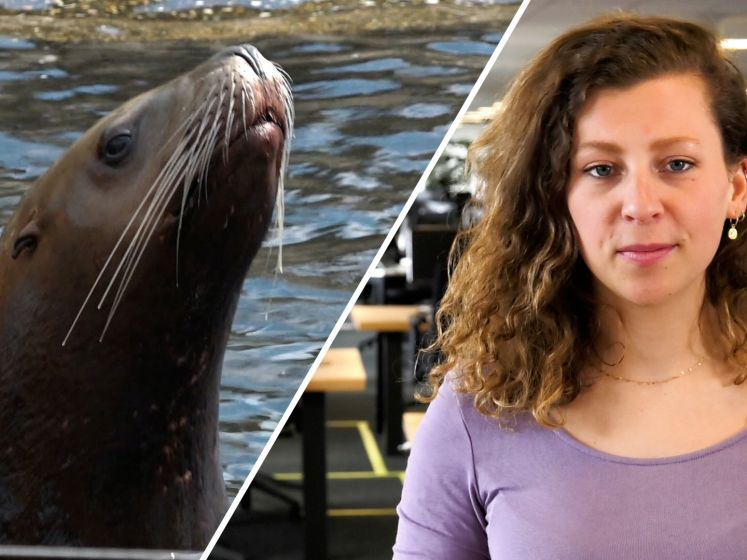 De Stentor Nieuws Update | Dodelijk ongeluk in Deventer en Dolfinarium stuurt een hoop dieren naar China