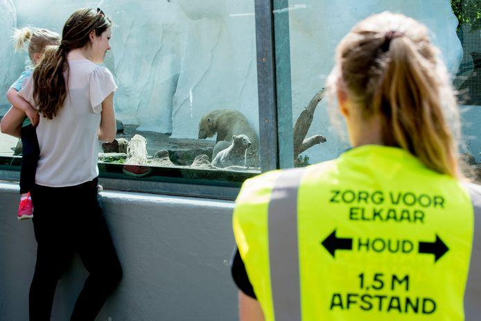 Bezoekers van het Ouwehands Dierenpark in Rhenen kijken, onder toeziend oog van controleurs, naar de pasgeboren ijsbeertjes. Foto ter illustratie.