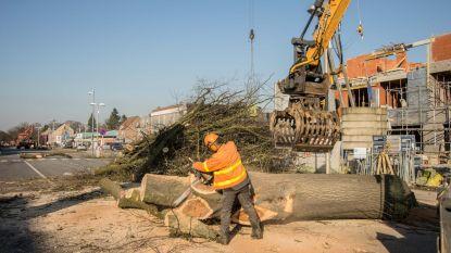 Alle bomen in Tuinwijk tegen 2024 gekapt én vervangen