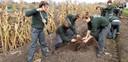 De leerlingen van PTS Mechelen oogsten yacon