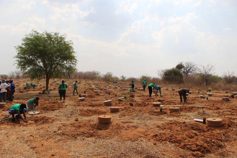 Zambia Beeld Trouw