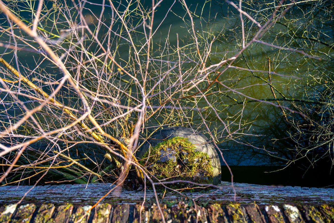 Planten groeien van onder de brug door.