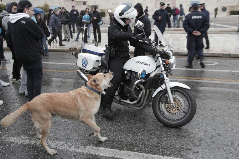 Loukanikos vandaag bij het Griekse parlementsgebouw in Athene. © AP<br /> Beeld