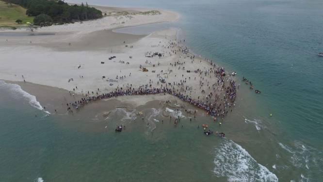 Zeven aangespoelde walvissen gered nadat locals en toeristen massaal in actie komen