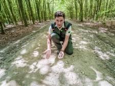 Oplossing voor kilometers onbegaanbare paden, aannemer trekt eind oktober opnieuw Balijbos in