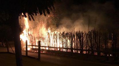 Metershoge vlammen verteren kurkdroge sparrenhaag