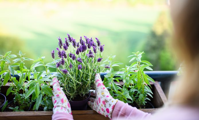 Hoe leg je je tuin aan met een klein budget