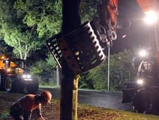 Wethouder door het stof na kritiek op bomenkap in Vriezenveen