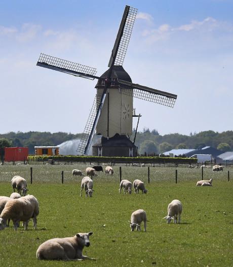 Molens in Wanroij en Rijkevoort in de rouwstand vanwege overlijden Bert van Dommelen