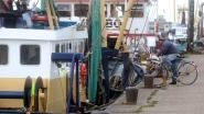 Belgische vissers vangen meer tong, inktvis en rog