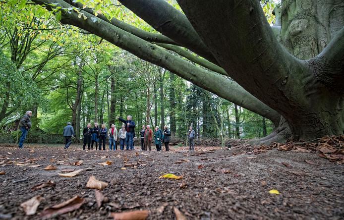 In oktober verkenden de kunstenaars Belmonte Arboretum