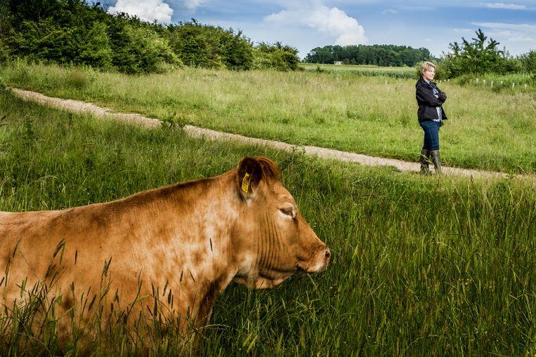 Een wandeling door het groen doet een mens goed. Beeld © STEFAAN TEMMERMAN