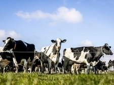 Lezers over boeren die massaal weg zouden moeten: 'Zo gaat Nederland nog meer kapot'